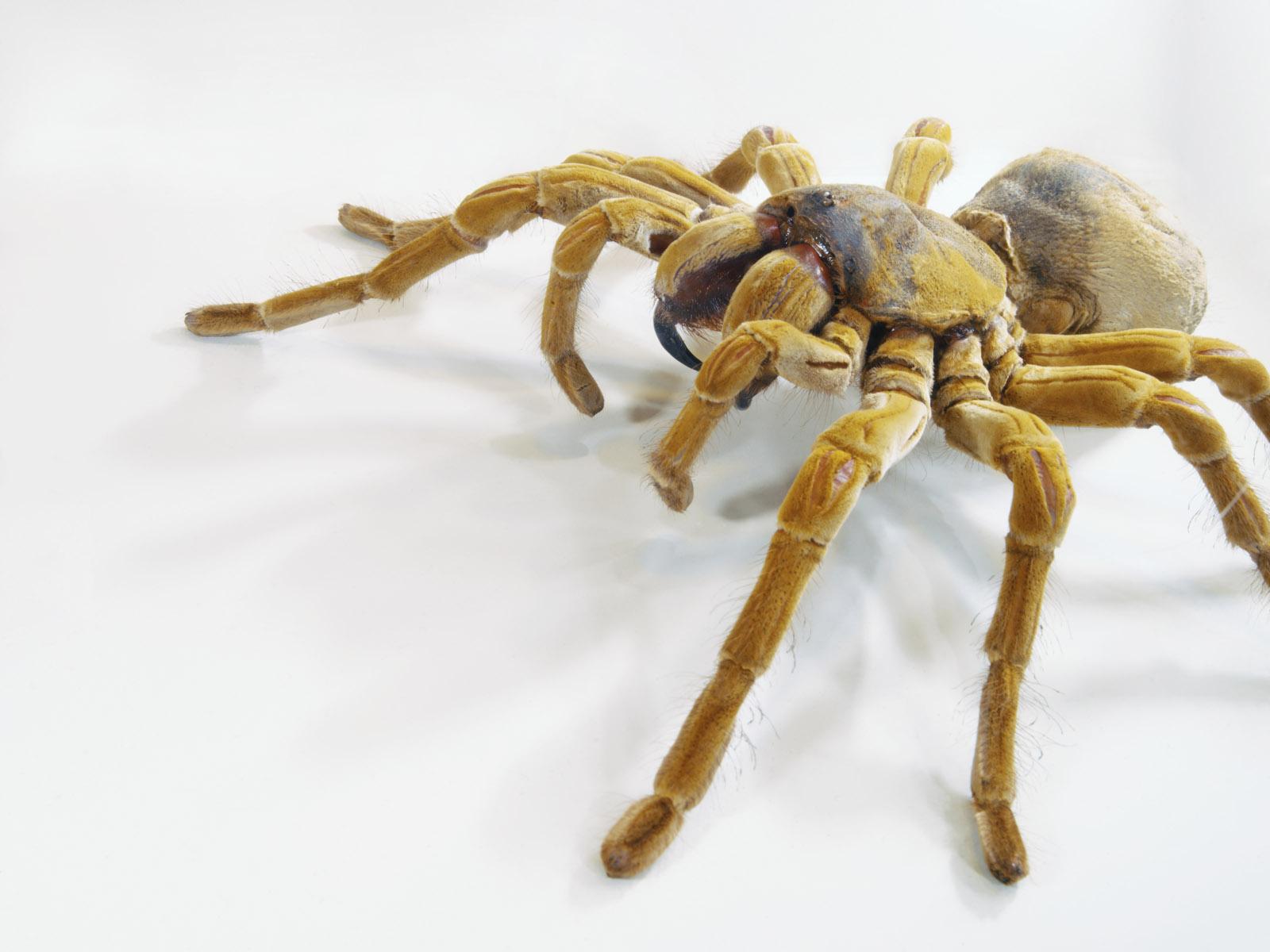 Ru обои на рабочий стол насекомые на