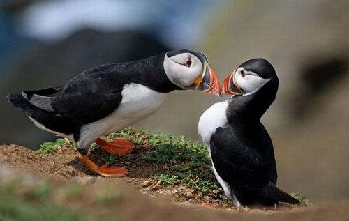 Животные целуются фото 0