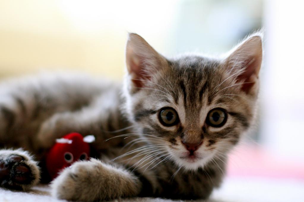 котята жодино с фото #11