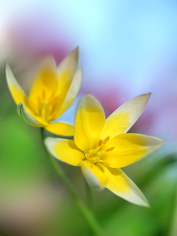 Фото летние цветы в природе 7