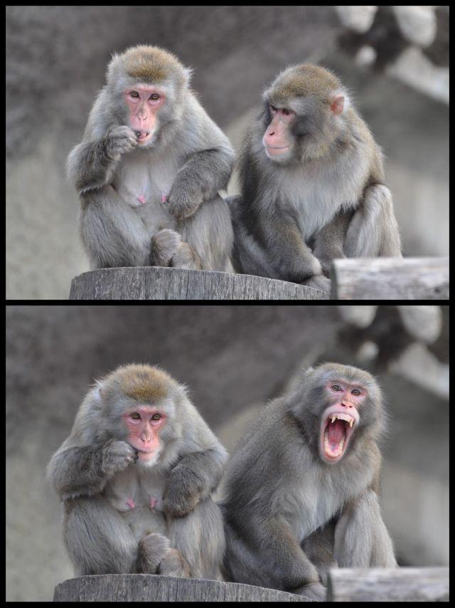 Картинки смешных обезьян с надписями