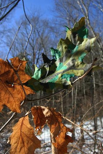 Рисунки на листьях и камнях фото 12