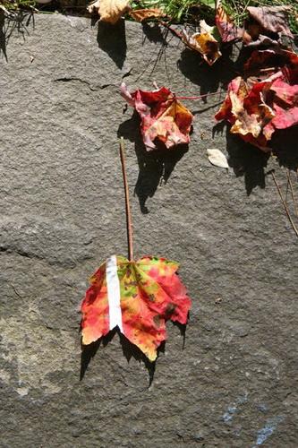 Рисунки на листьях и камнях фото 47