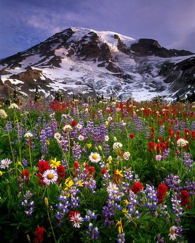 Пейзажи с природой картинки