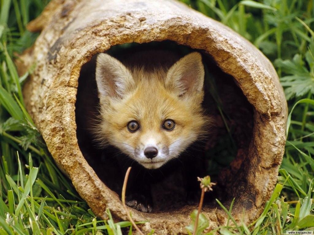 Самые красивые фотографии диких животных | Только