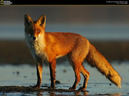 Животный мир дикие животные фото 0
