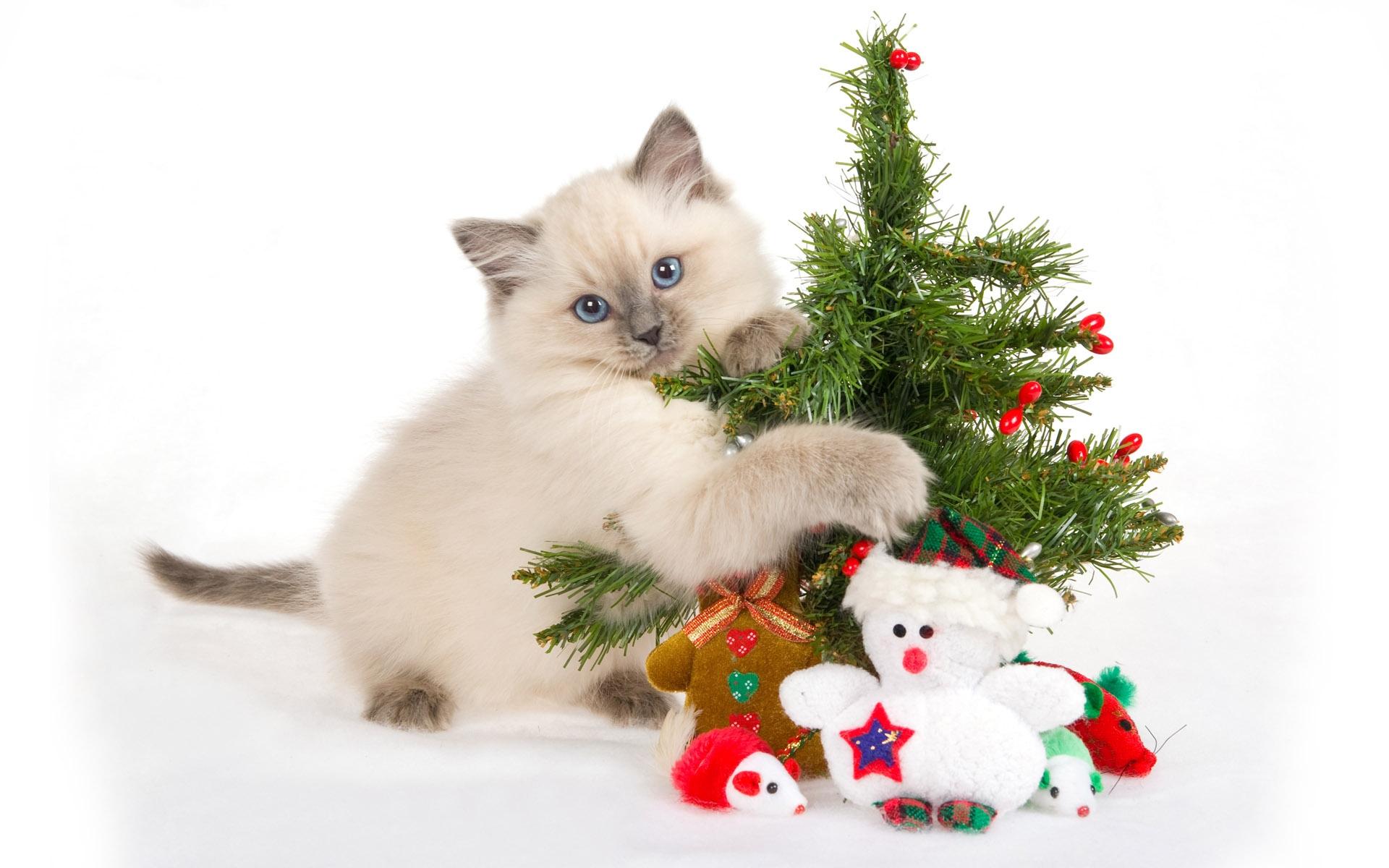Картинки кошек и котят смешные гифки контроль
