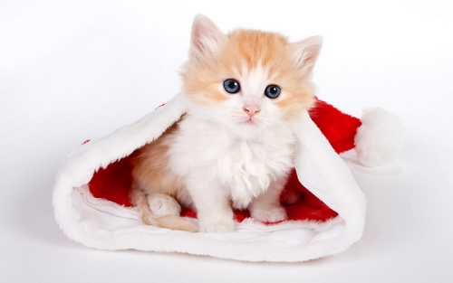 Картинки на рабочий стол зима котята
