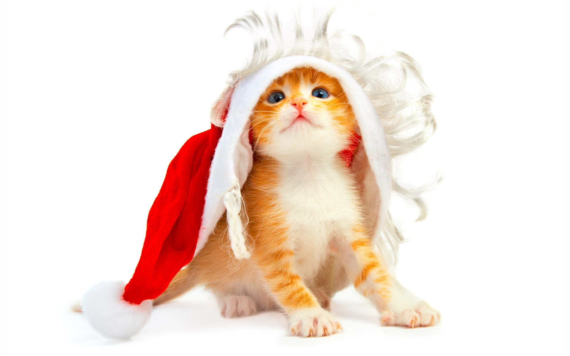 На рабочий стол новогодние котята на