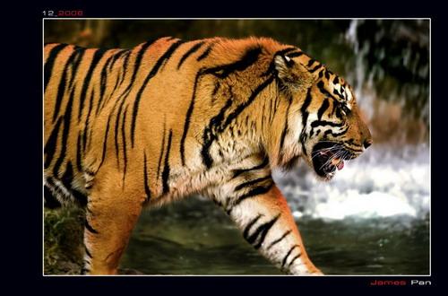 Фото машины тигр