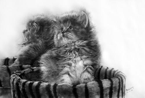Кошки фото 13
