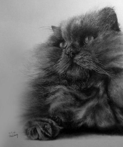 Кошки фото 16