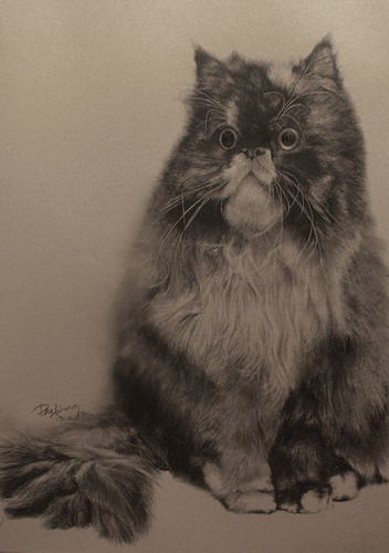 Кошки фото 24