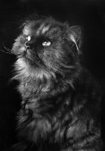 Кошки фото 26