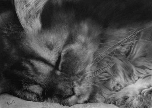 Кошки фото 28
