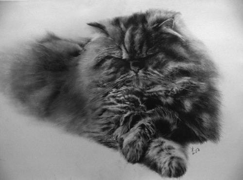 Кошки фото 29