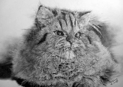 Кошки фото 30