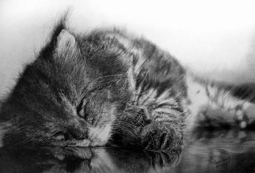 Кошки фото 0