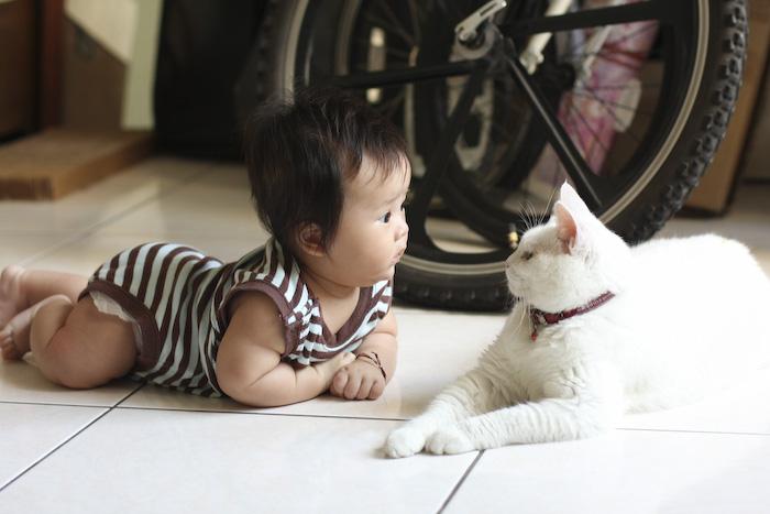Смешные до слез картинки с котами и младенцами, росой траве