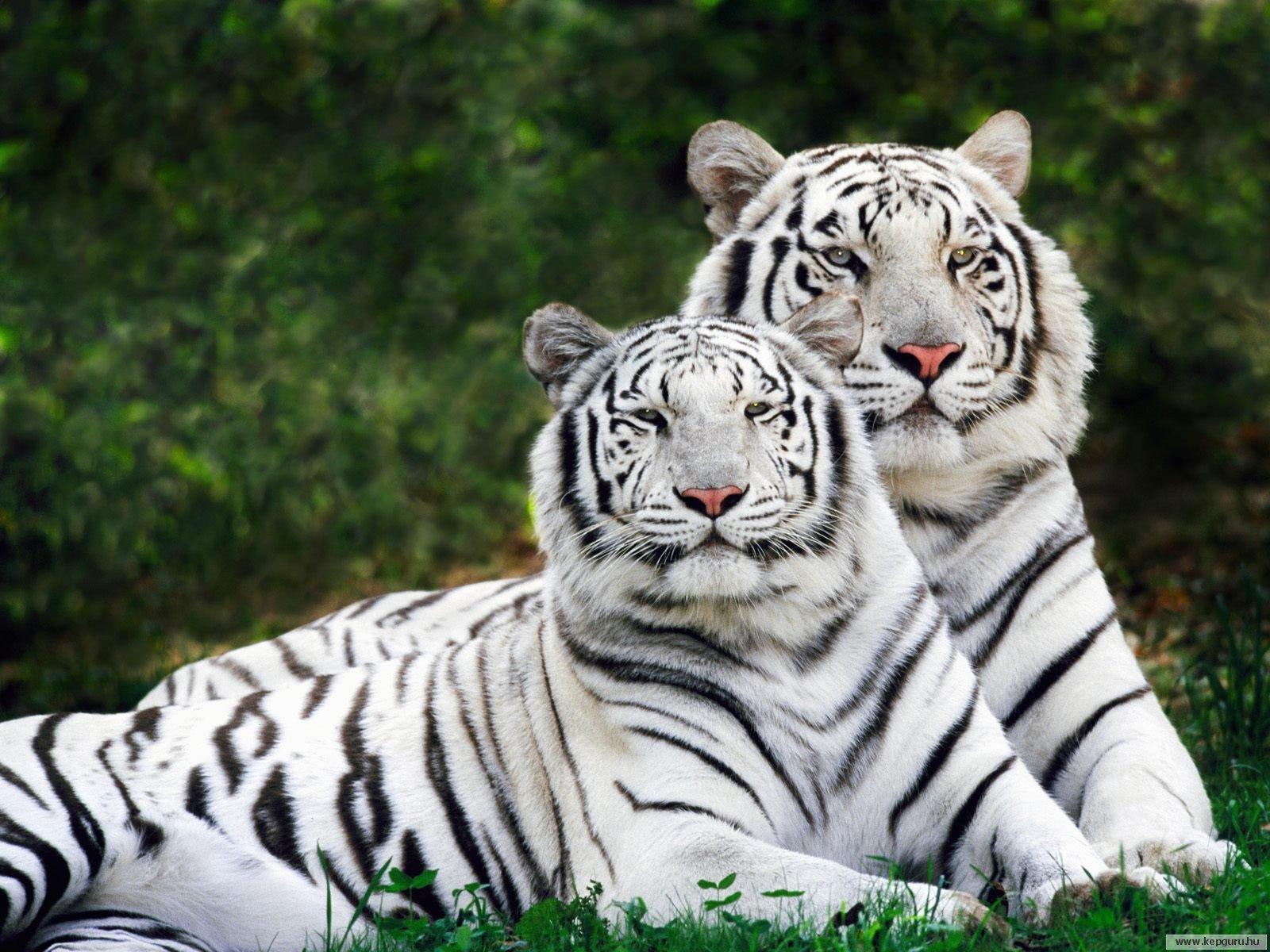 Картинка про животный мир