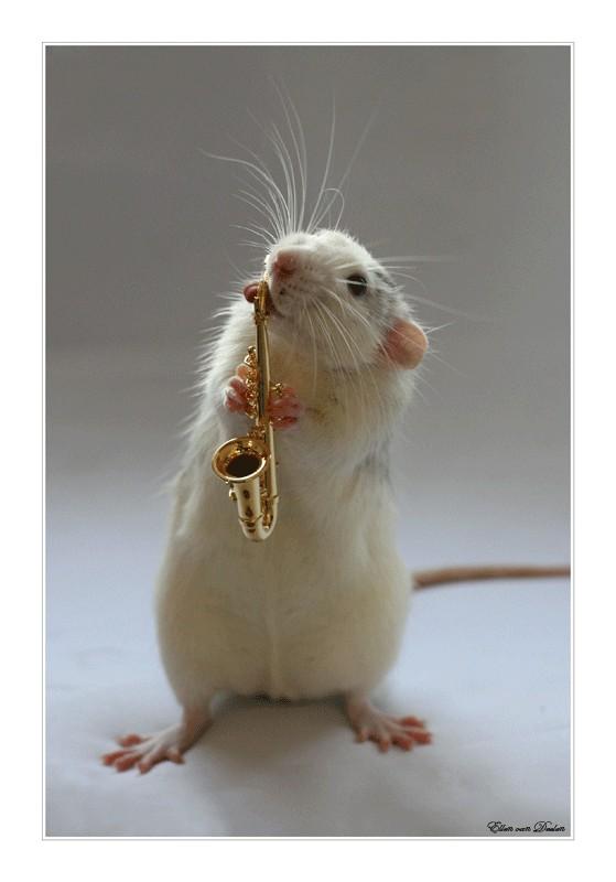 Крысы смешные картинки, открытки нарисовать