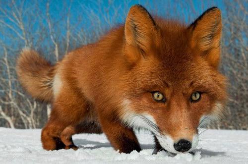 Веселая подборка фотографий животных