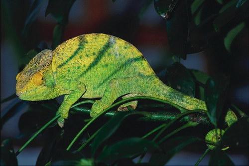 Открытки с рептилиями 33