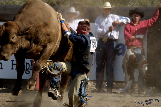 Про спорт :: Укратители быков фото 0