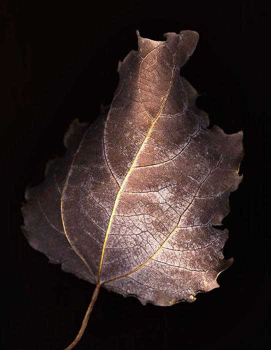 Природа :: Сканография :: фотография 2