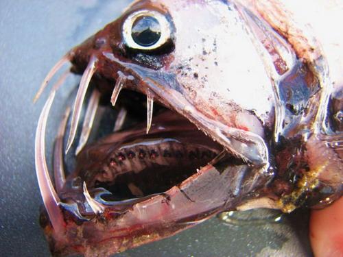 http://basik.ru/images/sea_monsters/11.jpg