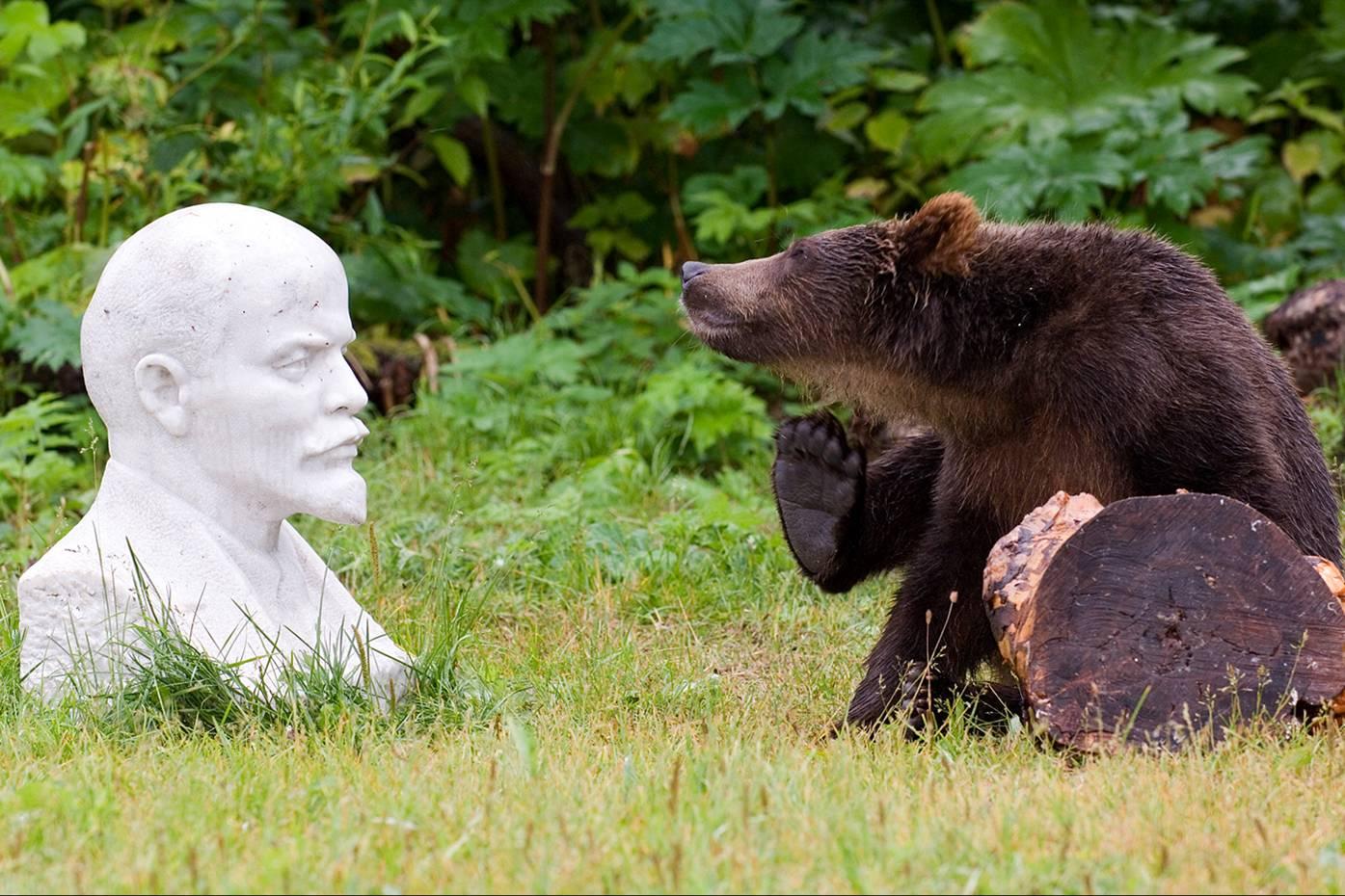Смешные картинки о россии с медведями