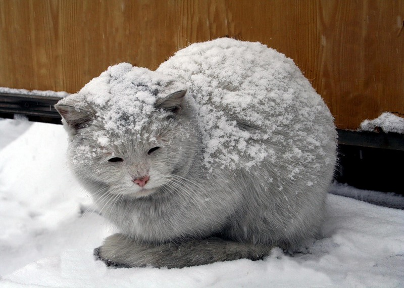 картинка замерзший котенок никогда выходит