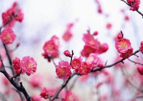 http://basik.ru/images/spring_56/short.jpg