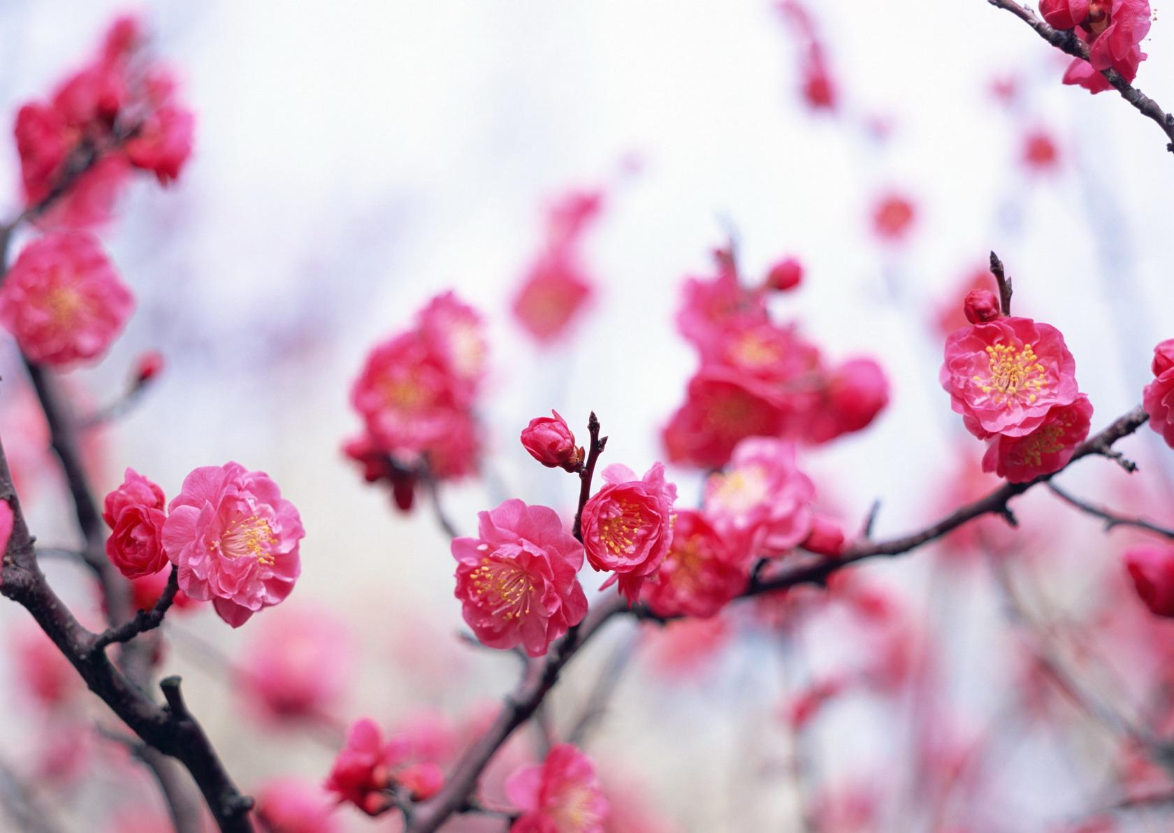 Basik ru природа цветы на рабочий стол