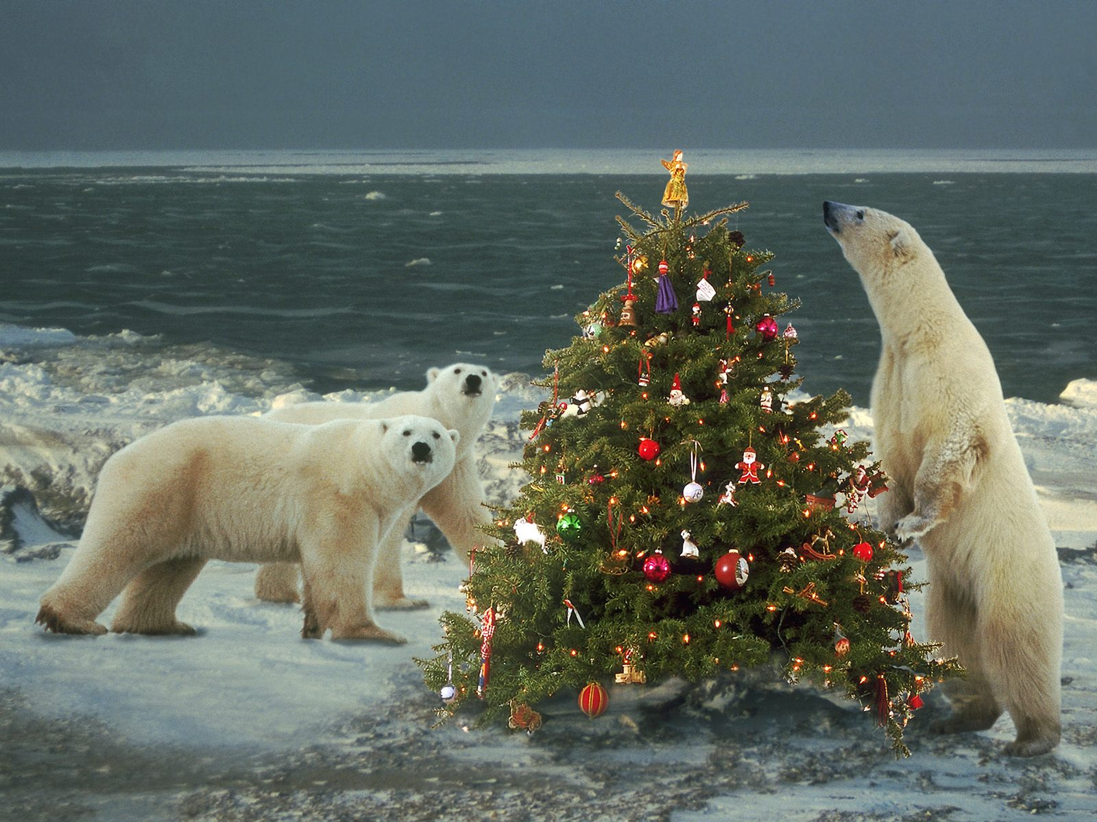 Картинки приколы арктика