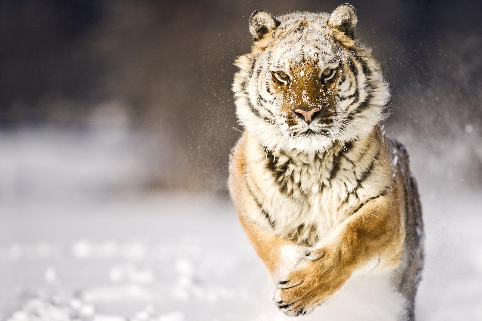 Картинки животных двигающиеся