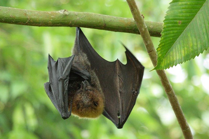 хорошие картинка летучая мышь на дереве доброго утра
