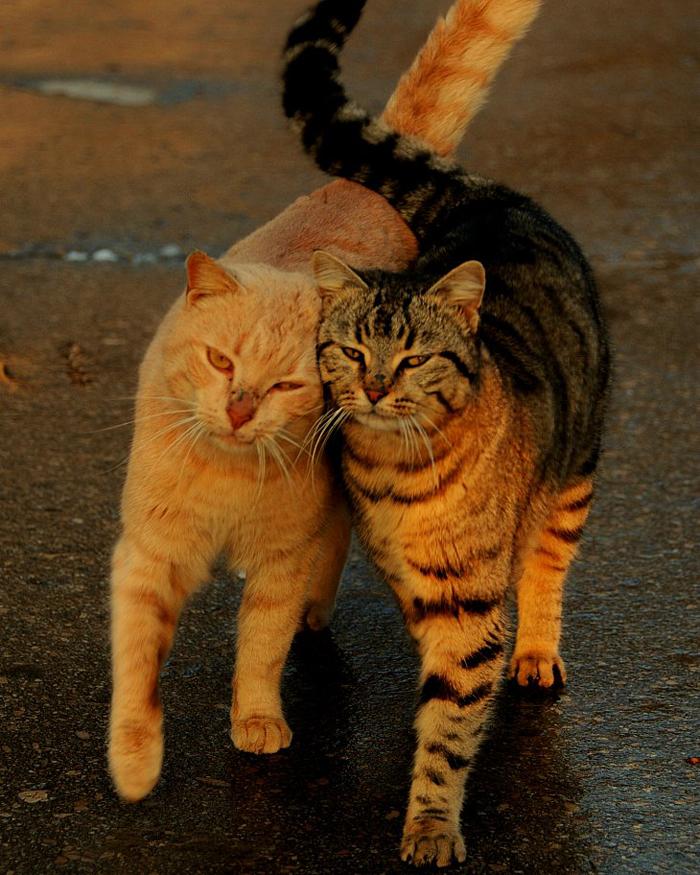 Для, любовь к кошкам картинки