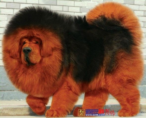 Питомники собак в Перми  список питомников фото адреса