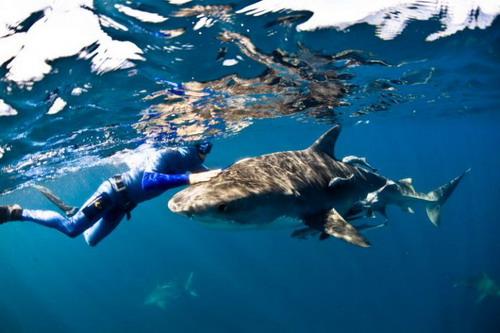 Животный мир танцы с акулами