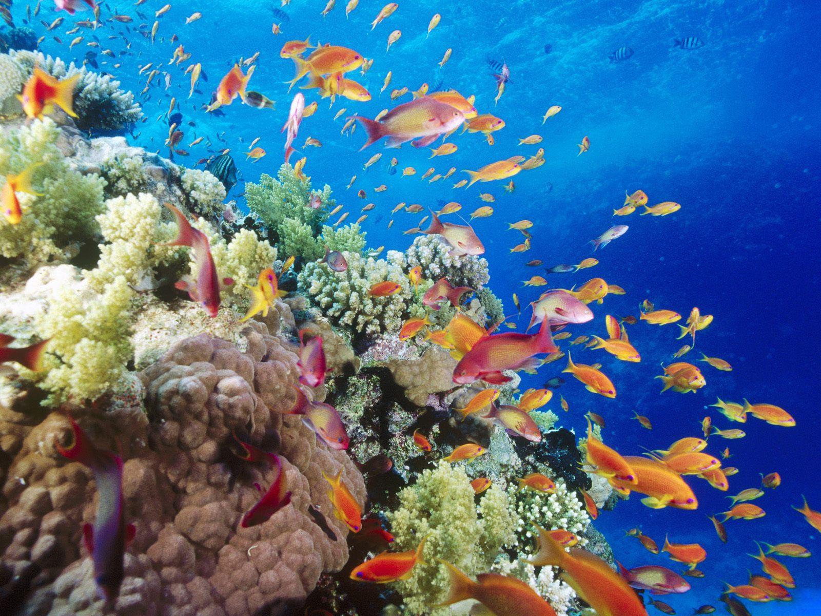 Ru обои на рабочий стол подводный мир
