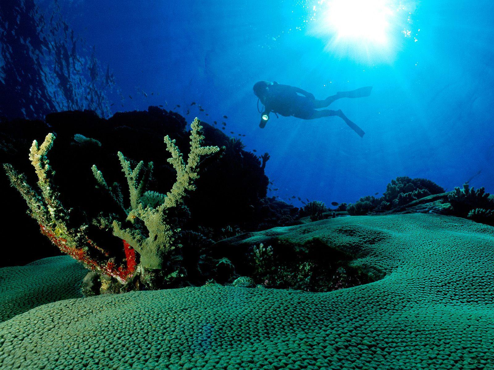 на дне океана картинка неординарному человеку всегда