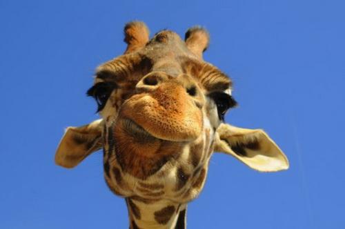 Самые смешные картинки животных мира