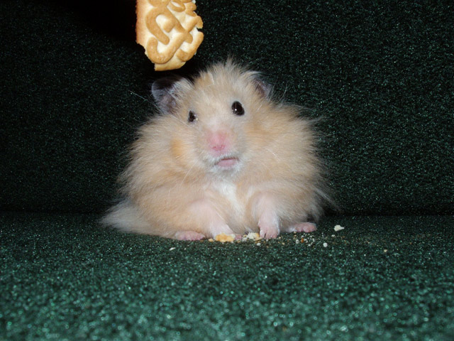 funny hamster pictures for kids - photo #28