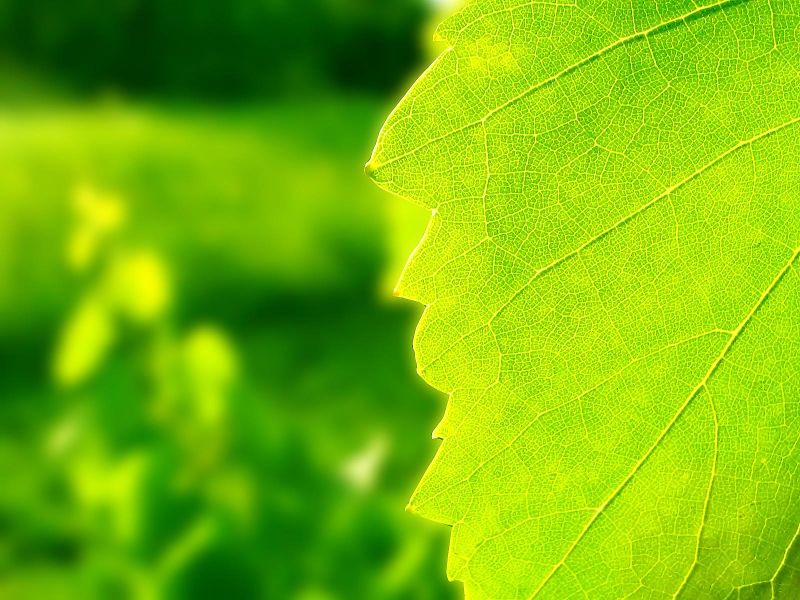 Желто-зеленые листки  № 3114921  скачать