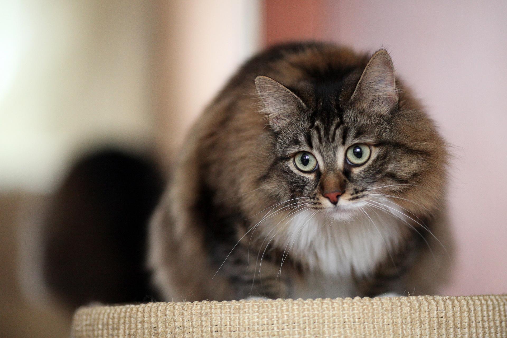 Basik ru обои на рабочий стол кошки на