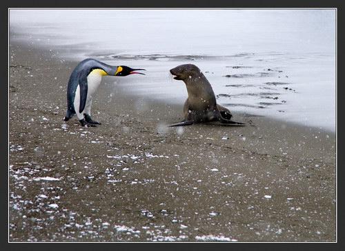 Мир дикие животные wild animals 2 животные