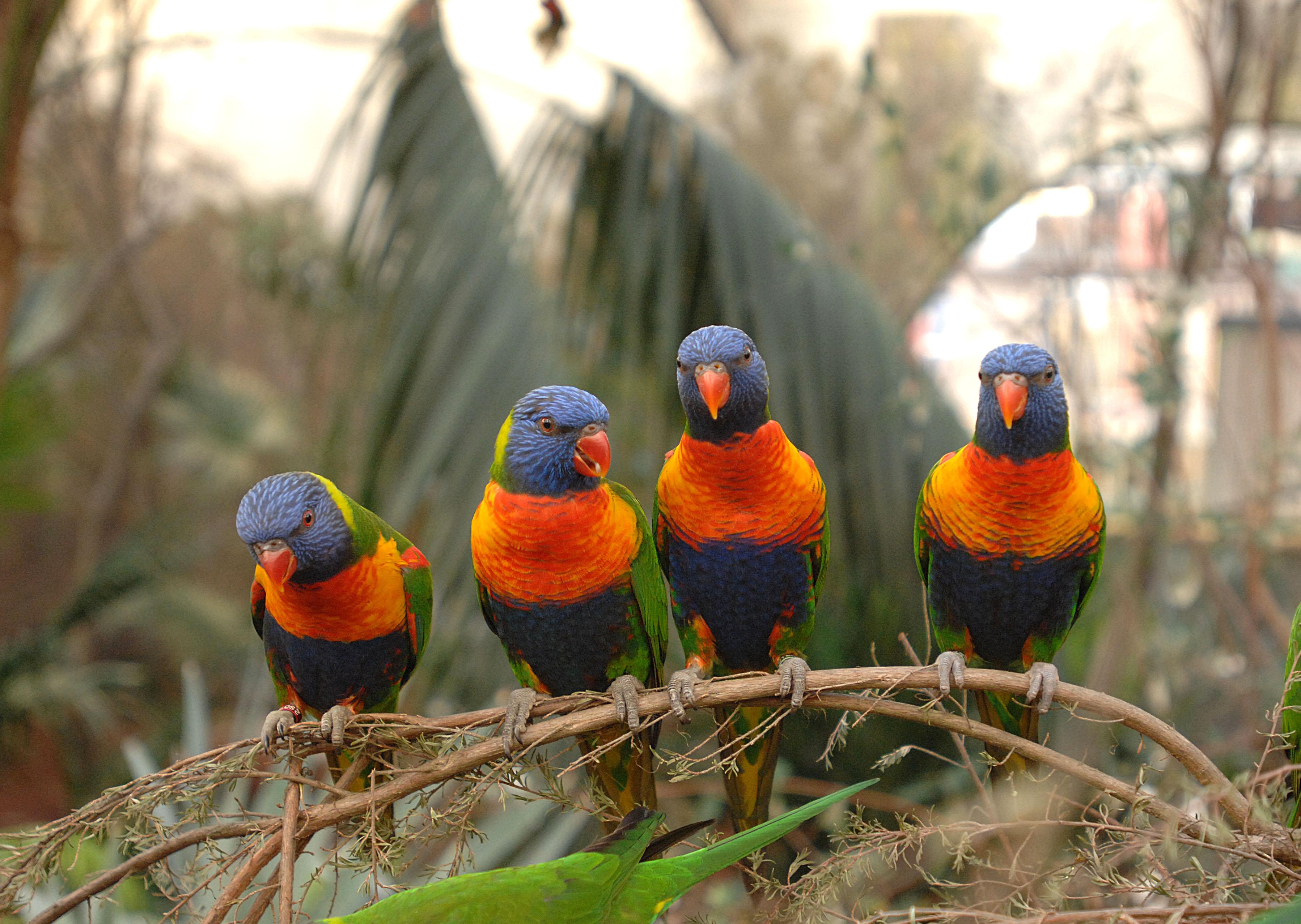 Basik ru животный мир дикие животные