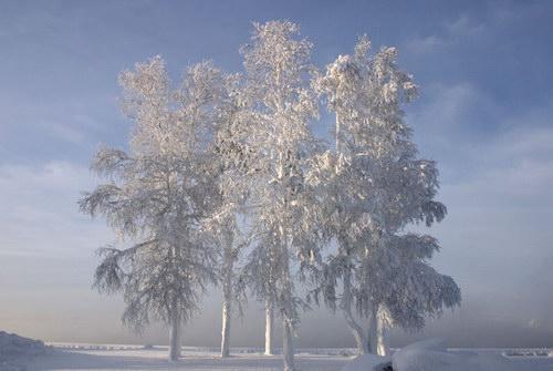 Природа зима winter зима снег basik ru