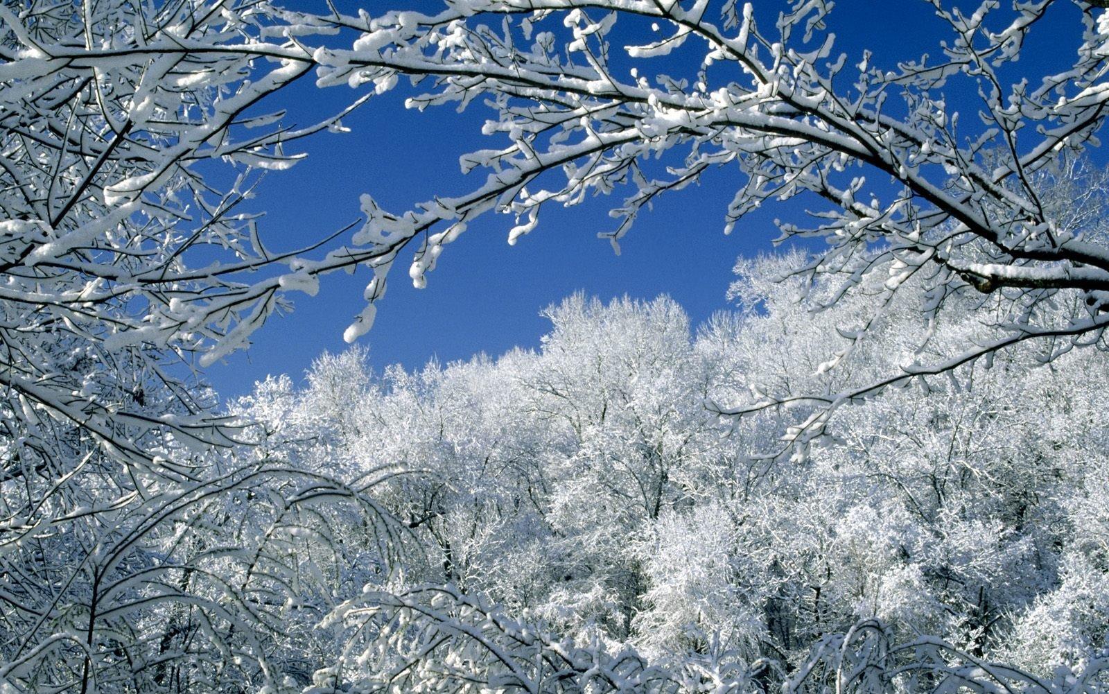 свою зимний день живые картинки холодной
